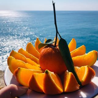 Sliced orange.jpg