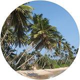 Palm Beach.jpg