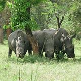 11 Rhinos_Fotor.jpg