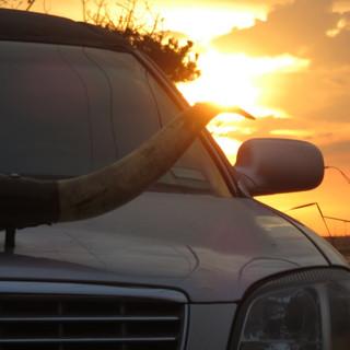 Long Horn Cadillac.jpg