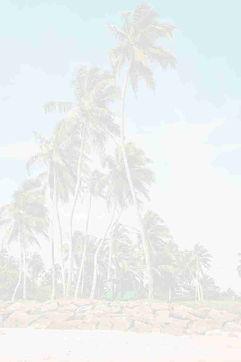 Palms background.jpg