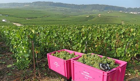Waris-Larmandier Champagne fields.jpg