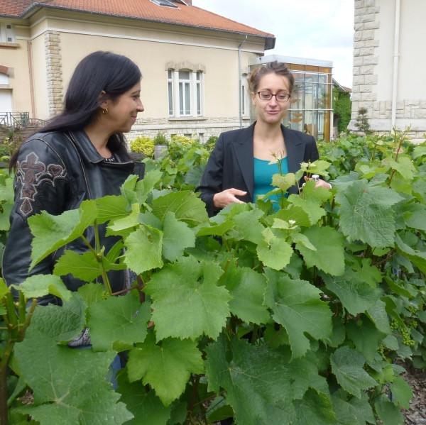Veuve Clicquot grapes.jpg