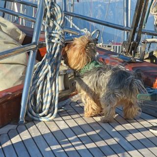 Dog in boat.jpg