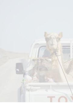 Untitled Camel_Fotor.jpg