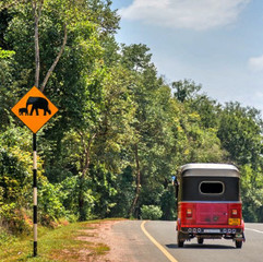Elephants on the road.jpg