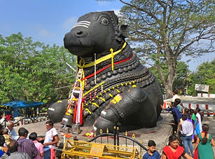 Nandi holy cow.jpg