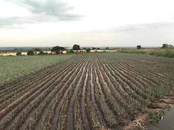 irrigatedField.jpg