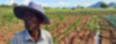 Field irrigation, Nhamandembe Scheme.