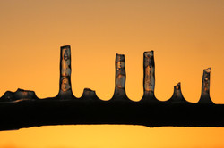 Illuminated Icicles 4