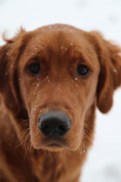 A Puppy's First Blizzard