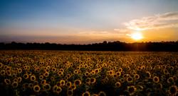 Fields of Bliss