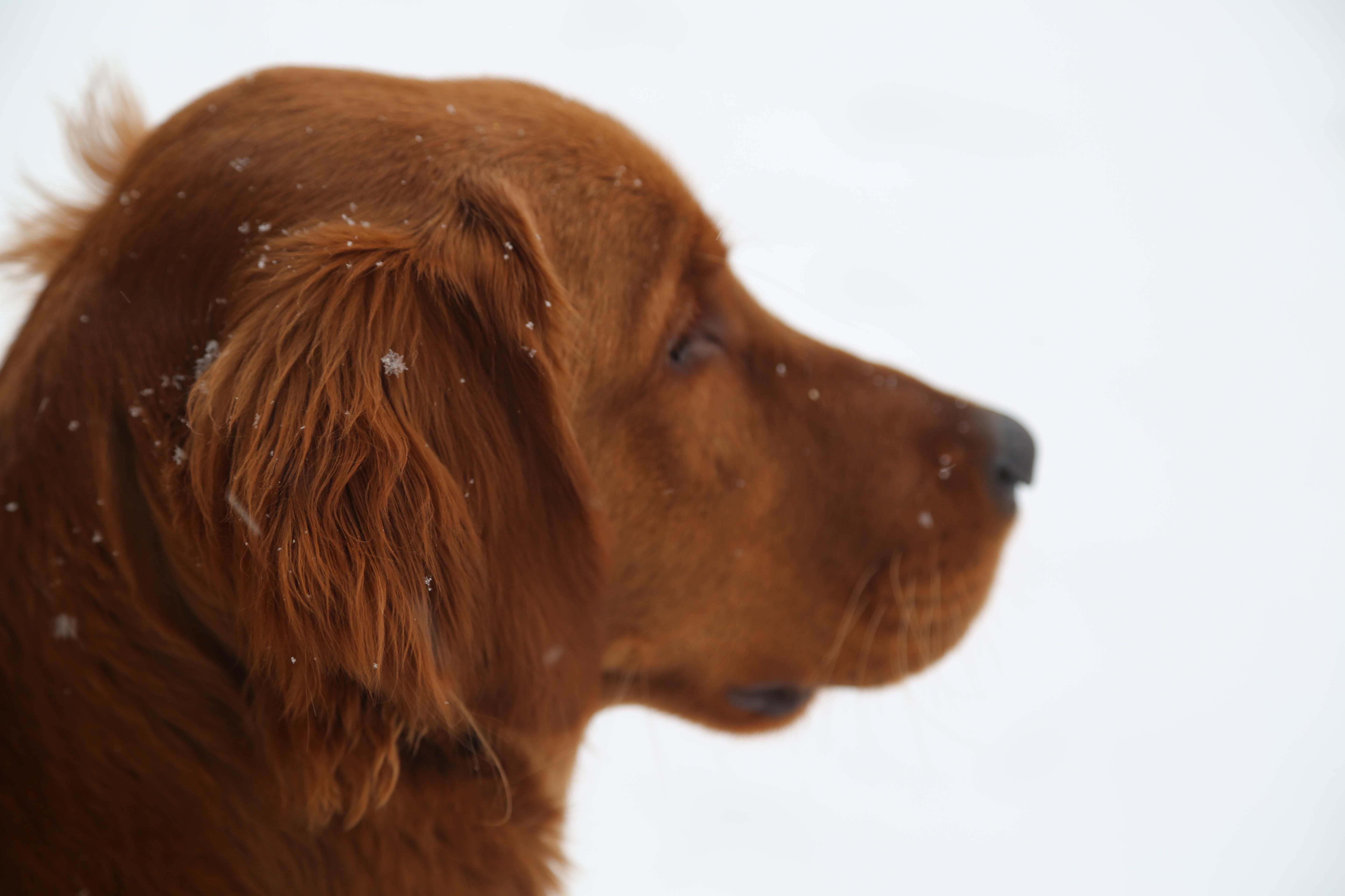 Gazing at the Snow Falling