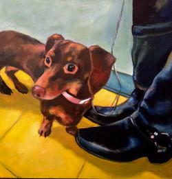 Shelby Pet Portrait 24 x 24 oil on canvas
