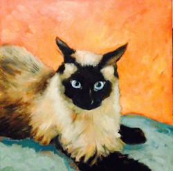 Mavi the Siamese Pet Portrait 24 x 24 inches