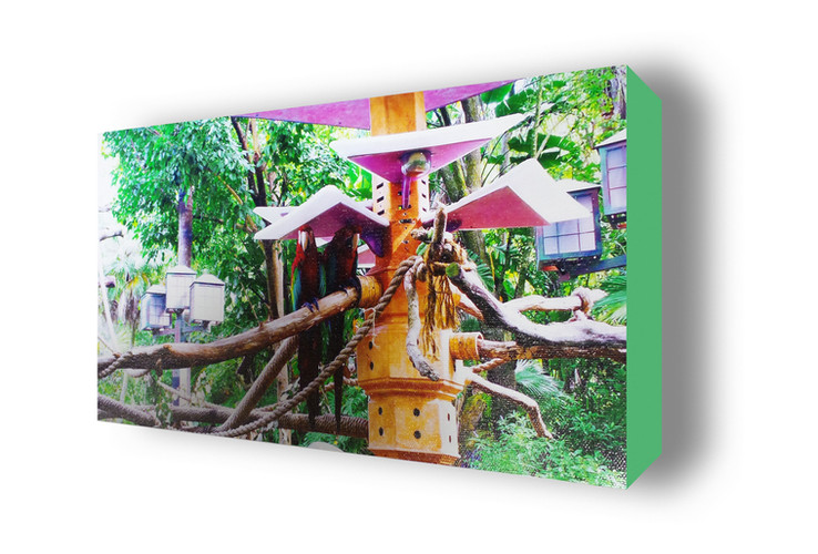 Parrots Gallery Wrap Solid Color