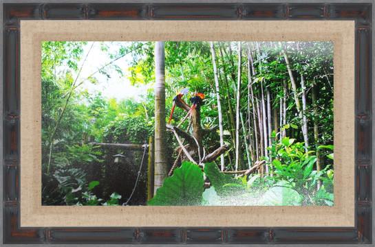 Framed Parrots 2