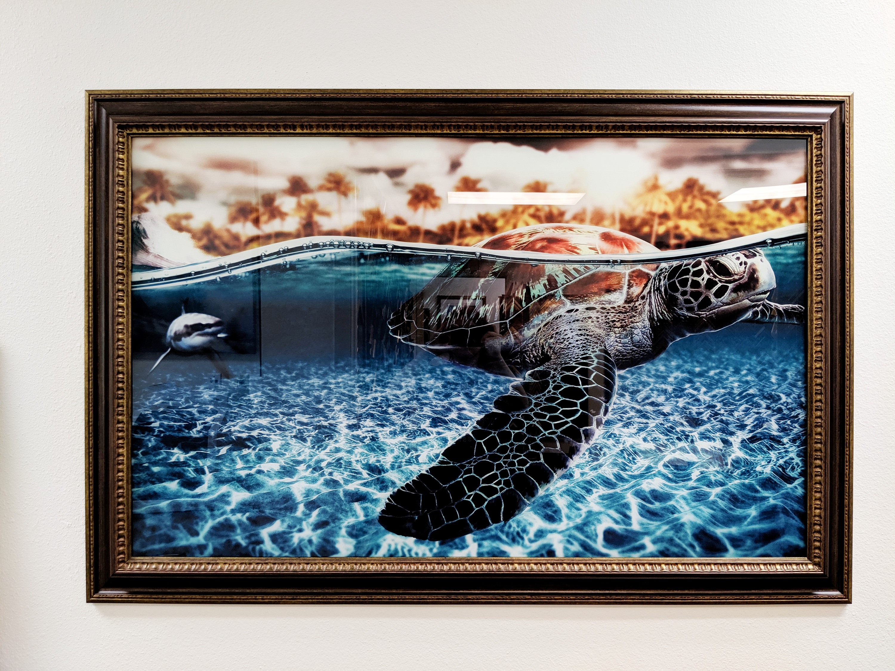 Sea Turtle Plexiglass print