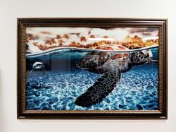 Sea Turtle Plexiglass print