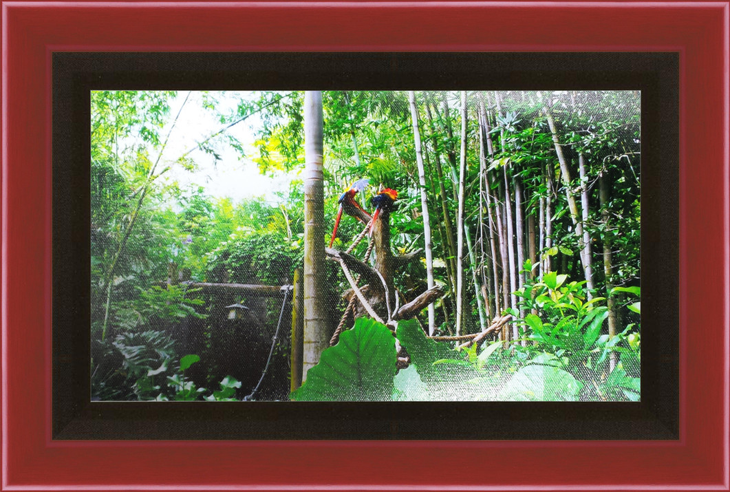 Framed Parrots 3