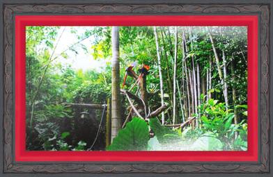 Framed Parrots 4