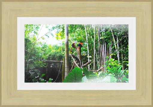 Framed Parrots 1