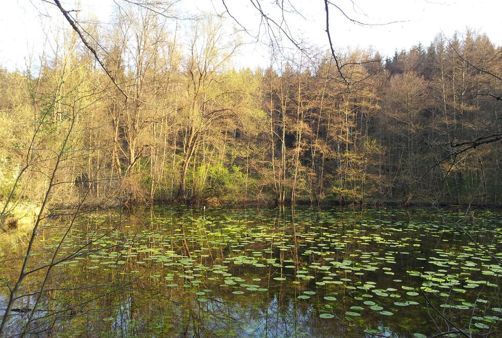 Kleinode_im_Schönbuch.jpg