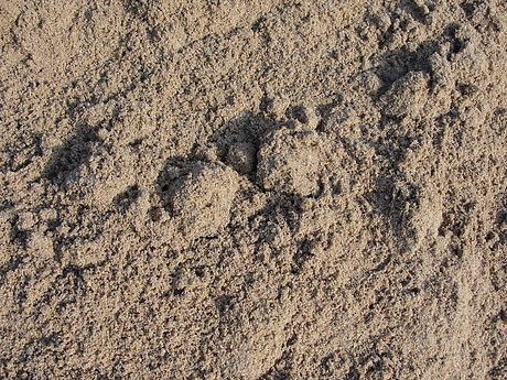 A_close-up_of_river_sand.jpeg
