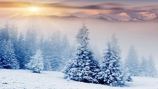 snowtrees.jpg