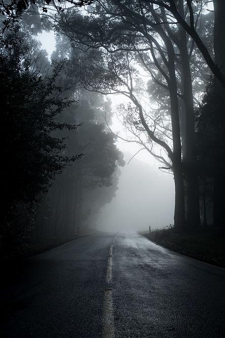 Loney-Misty-Road-Dark-Trees.jpg