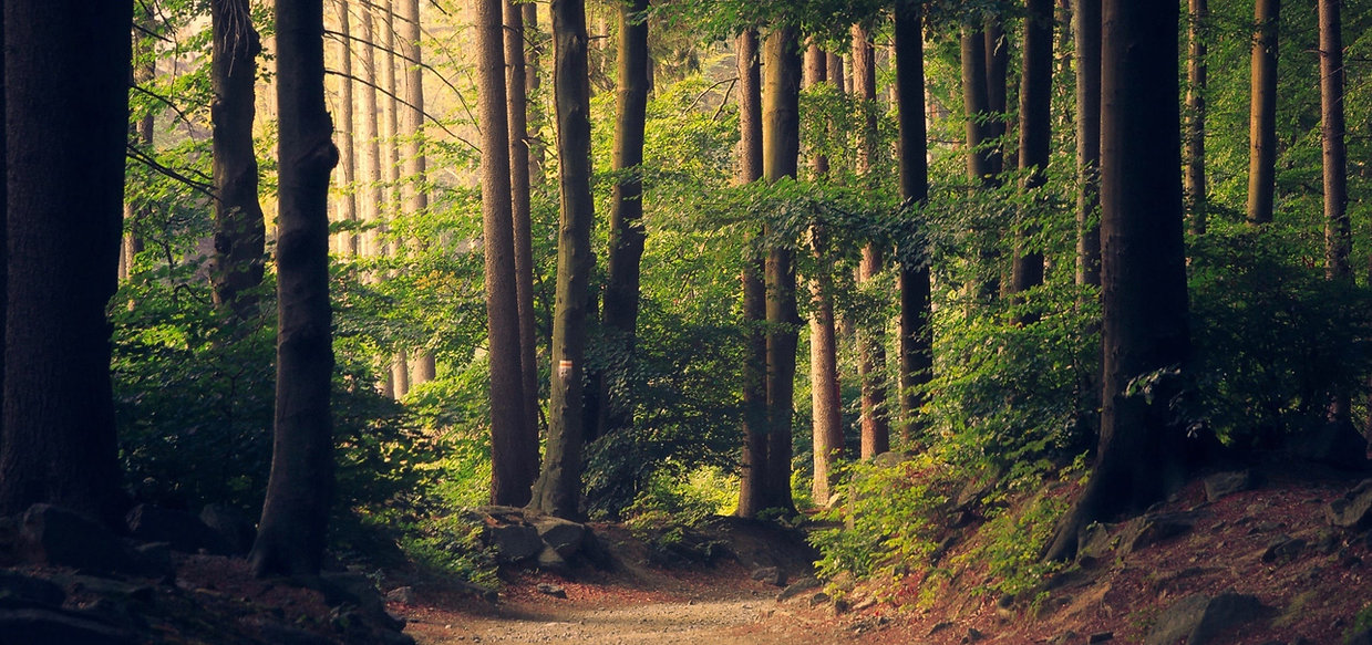 A dense forest of wild trees and bushes