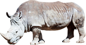 rhino_PNG2.png