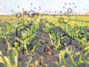 Smart Farming – Wie die Digitalisierung in der Landwirtschaft Einzug hält