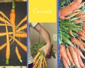 Carrot Collage