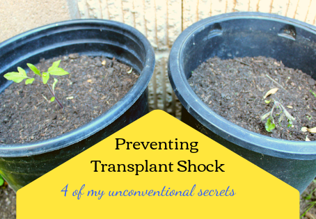 My Secrets to Prevent Transplant Shock