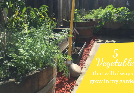 5 Vegetables that I always plant in my garden