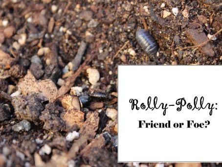 Pesky Pests: Rollie-Pollies (pill bugs)
