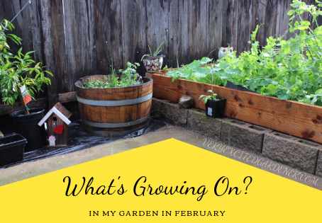 What's Growing On: February 2019