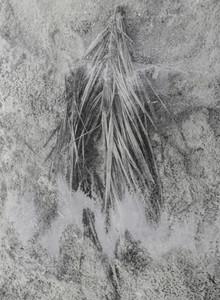 Palm branch, #04