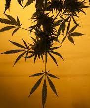 House agrees to expand Louisiana's medical marijuana program