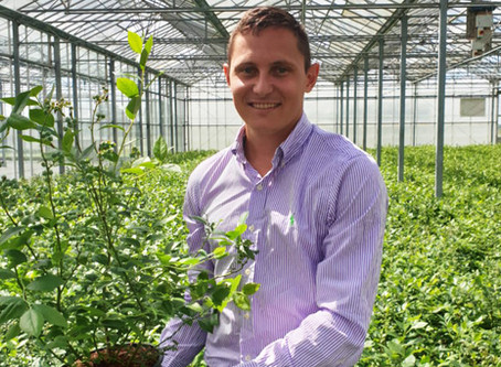 Plants365 signs MSU blueberry variety licenses