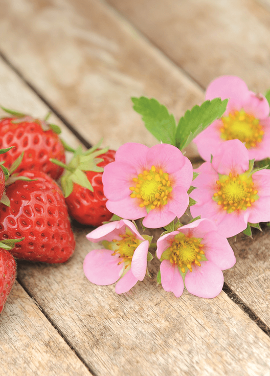 just-add-cream-strawberry-flowers.png