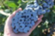 titanium_blueberry.jpg