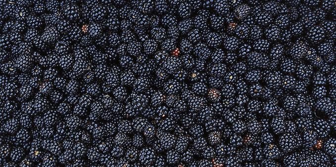 blackberry_bg.png