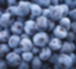 Chanticleer blueberry