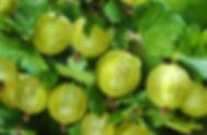 Hinnonmaki Green.jpg