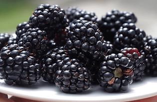 loch-ness-blackberry.png