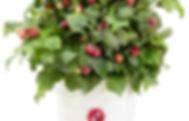 Raspberry_Yummy_1.jpg