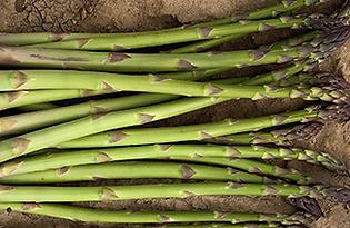 Greenic Asparagus