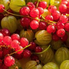 Currants & Gooseberry